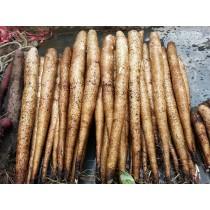 鉅鹿堂人蔘山藥 新鮮整根(一條)一斤 採用深耕有機農法,安全無毒。