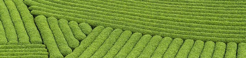 各式台灣茶葉